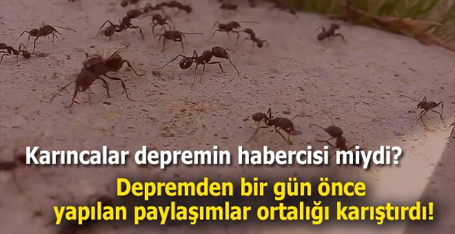 """""""Karıncalar depremin habercisi miydi?"""""""