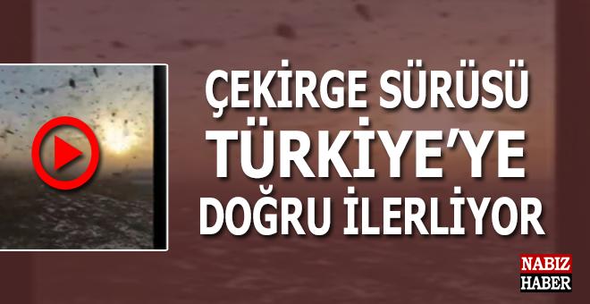 Dev bir çekirge sürüsü Türkiye'ye doğru ilerliyor!