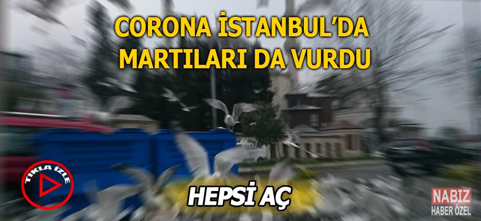 Koronavirüs salgını İstanbul'da martıları da vurdu!