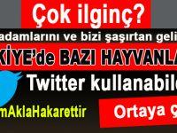 """Çok ilginç; Türkiye'de bazı hayvanların """"Twitter"""" kullanabildiği ortaya çıktı!"""