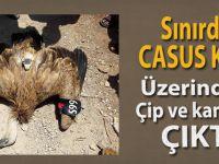 Suriye sınırında casus kuş yakalandı!