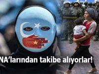 Uygur Türklerini DNA'larından takibe alıyorlar!