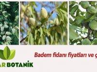Badem Fidanı Fiyatları ve Çeşitleri Rüzgar Botanik'de!